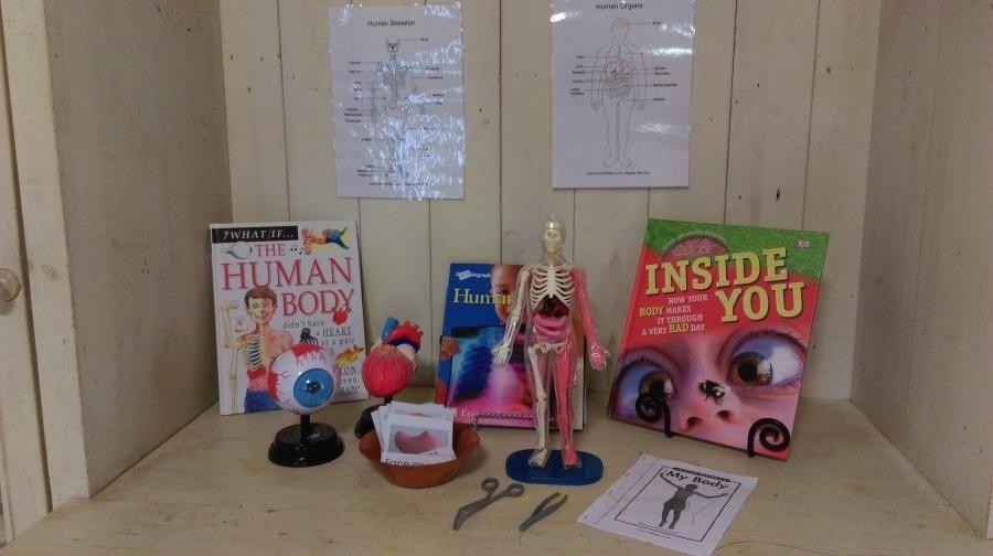 Interest shelf ….The HumanBody.
